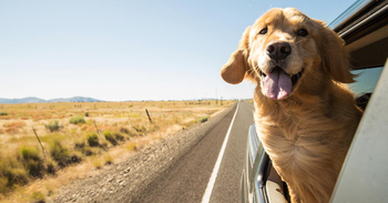The Best Ways to Travel With Man's Best Friend