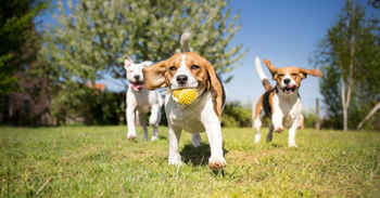 Must-have Apps for Finding Local Dog Parks