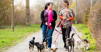 Top Apps to Find a Dog Sitter
