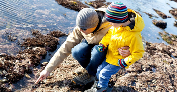 Best Apps to Help Your Family Enjoy a Tide Pool Adventure